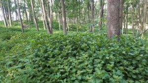 Midwest Forest Improvement