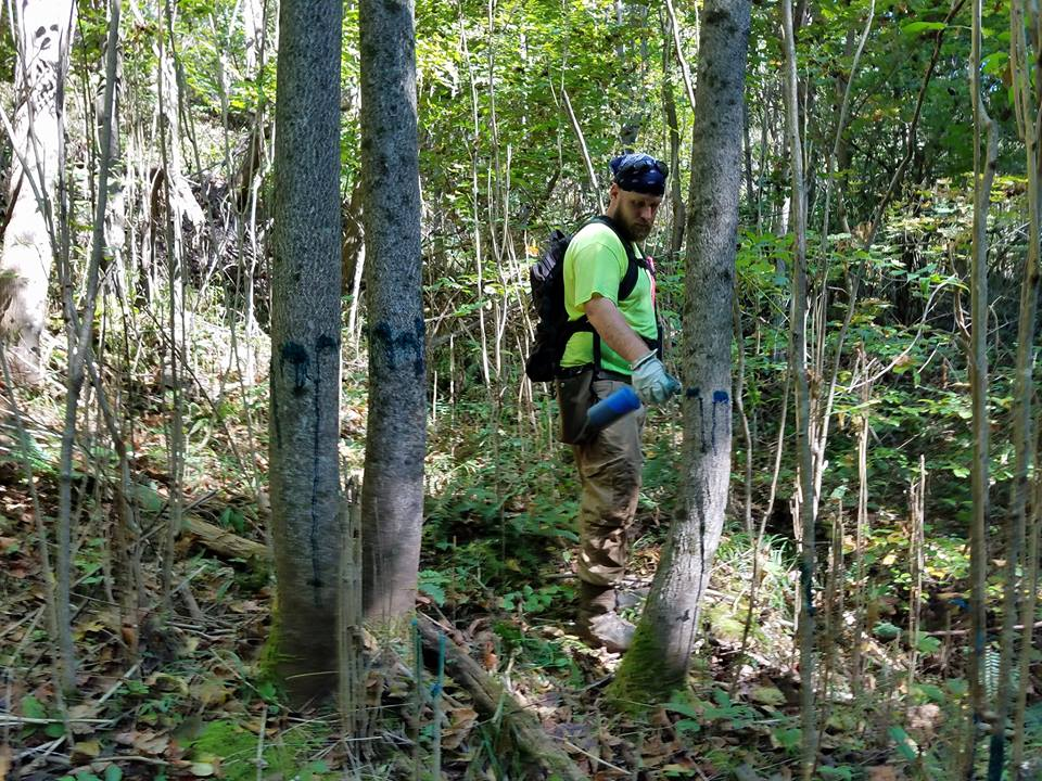 Southern Illinois Forest Management