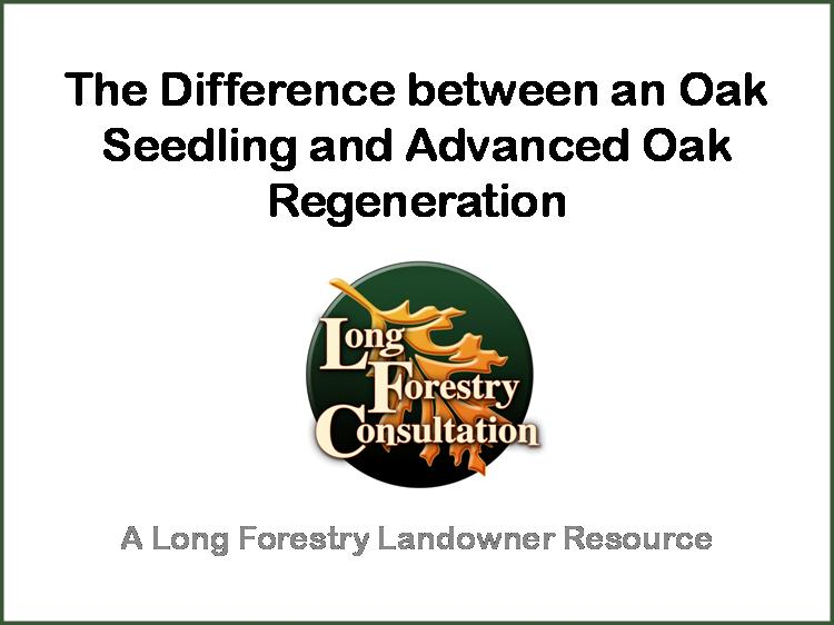 Advanced Oak Regeneration