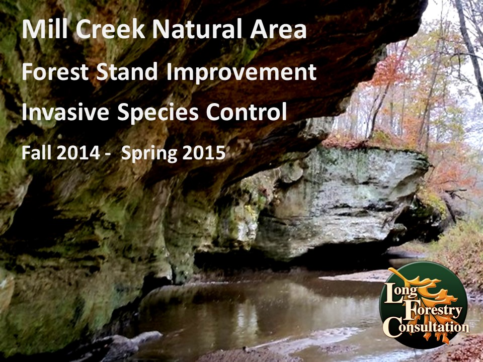 Mill Creek Natural Area Restoration Project